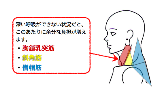 腰が弱いと肩甲骨まわりの呼吸補助筋に負担がかかります