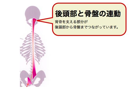 後頭部と骨盤の連動