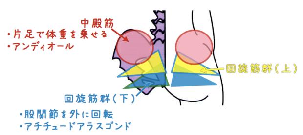 股関節開く筋肉