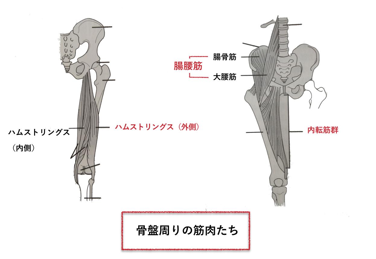 骨盤周りの筋肉