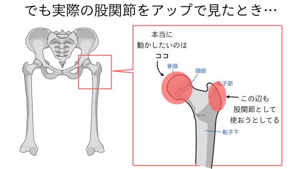 バレエで股関節が硬い意外な理由.005