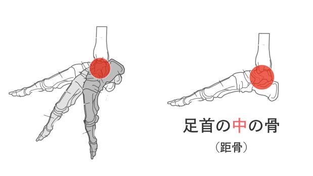 足裏の筋肉を使ってつま先を伸ばすために.028