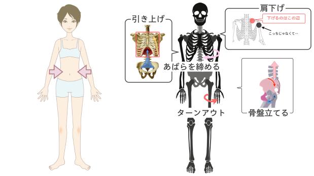 バレエで「ウェスト細くする」解剖学的な意味.006