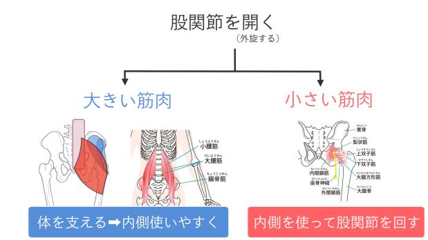 股関節を開く(外旋する)筋肉.010