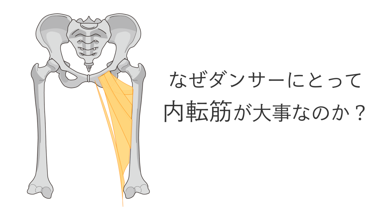 ターンアウトするときの内転筋の役割は?