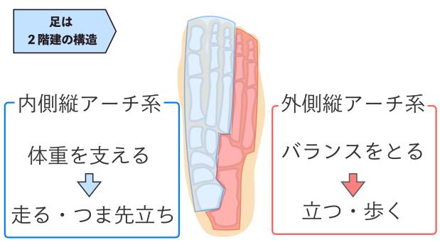 足のアーチの役割