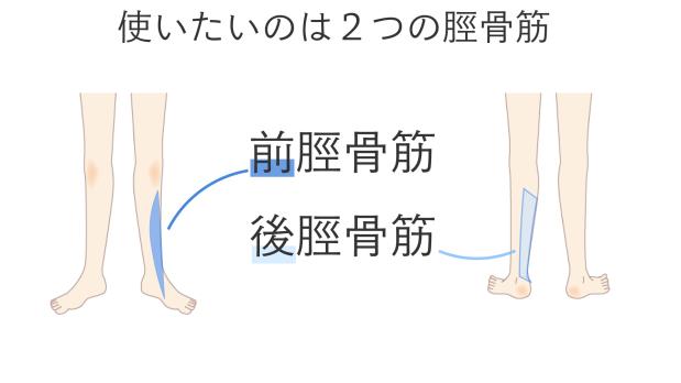 土踏まずを持ち上げる筋肉