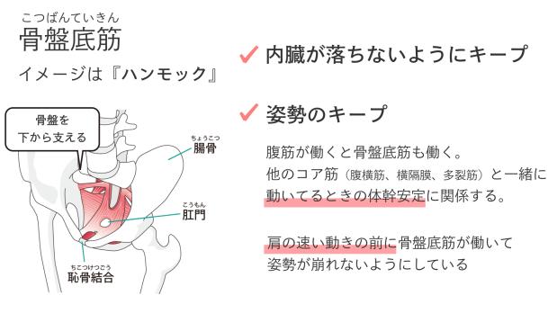 骨盤底筋の役割